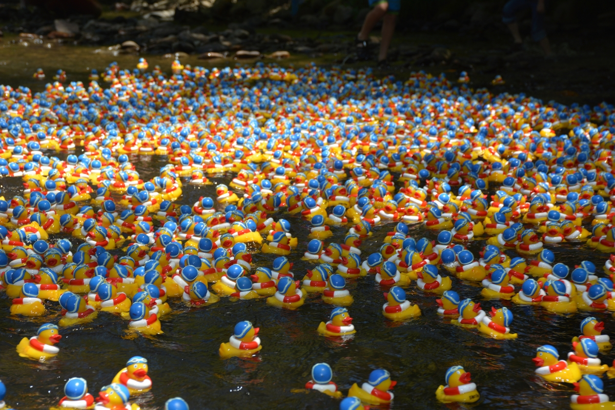 Rubber ducks floating on a river.